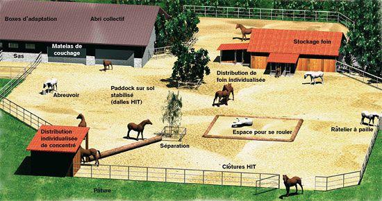 Les structures équestres évoluent : l'écurie active